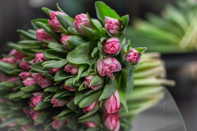 Моно з тюльпанів  064
